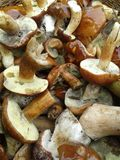 Mushrooms. Macro image royalty free stock photography