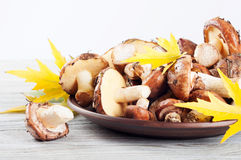 Mushrooms and maple leaves Royalty Free Stock Image