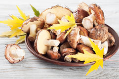 Mushrooms and maple leaves in a plate Royalty Free Stock Photos