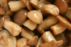 Mushrooms marinaded Stock Images