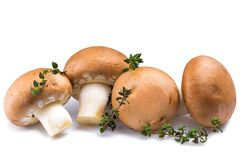 Mushrooms with marjoram herb  Stock Images