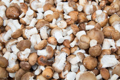 Mushrooms on Market Royalty Free Stock Images