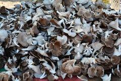 Mushrooms market Royalty Free Stock Photo