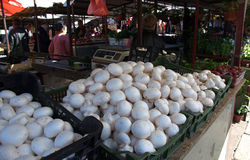 Mushrooms on market stall in Belgrade, Serbia Stock Photos