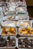 Mushrooms in Market Royalty Free Stock Photo
