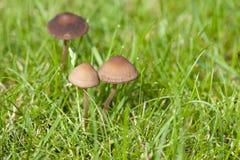 Mushrooms on meadow Stock Photos