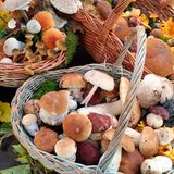 Mushrooms from Medvednica Royalty Free Stock Photos