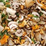Mushrooms. Mixed Mushrooms on Farmers Market Royalty Free Stock Photos