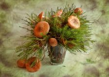 Mushrooms and moss Royalty Free Stock Photos