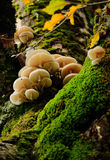 Mushrooms and moss Stock Image