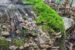 Mushrooms and moss Stock Photos