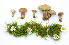 Mushrooms and moss collage on a white background Stock Photo