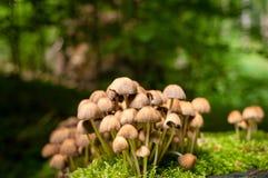 Mushrooms and moss growing on wet tree stump. stock image