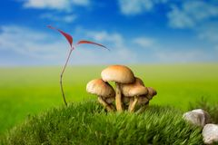 Mushrooms on moss on the meadow. Mushrooms on the green meadow Royalty Free Stock Images