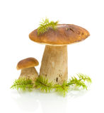 Mushrooms and moss on white background Royalty Free Stock Images