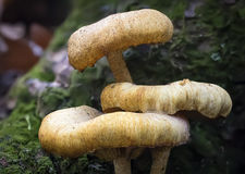 Mushrooms on mossy tree Stock Photo