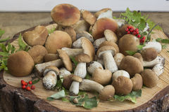 Mushrooms and mountain ash on a wooden background. Close up royalty free stock images