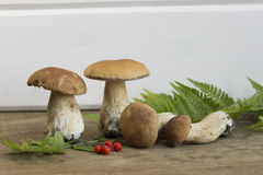 Mushrooms and mountain ash on a wooden background. Close up stock photos