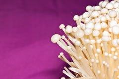 The mushrooms Royalty Free Stock Photo