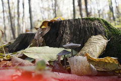 Mushrooms near tree trunk, Stock Image