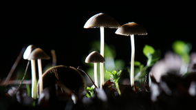 Mushrooms by night Stock Image