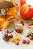 Mushrooms and nuts Royalty Free Stock Photos