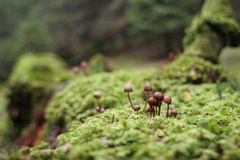 Mushrooms in an old tree trunk Royalty Free Stock Images