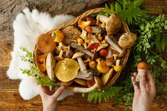 Mushrooms On Old Wooden Background. Card On Autumn Or Summertime. Forest Harvest. Boletus, Chanterelles, Leaves, Berries. Flat Lay Stock Photos
