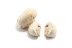 Mushrooms One Cut One Whole. Two white button mushrooms, one cut in half, the other still whole Royalty Free Stock Images