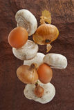 Mushrooms, onions and chicken eggs. Royalty Free Stock Image