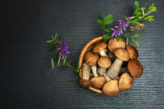 Mushrooms. Organic food ingredients Stock Photos