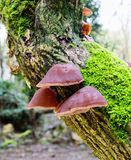 Mushrooms over the tree Royalty Free Stock Photo