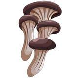 Mushrooms: oyster Stock Photos