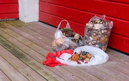 Mushrooms in packages on a wooden floor against a red wall Stock Photos
