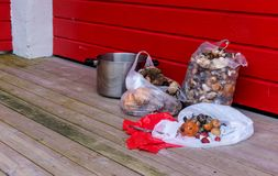 Mushrooms in packages on a wooden floor against a red wall Stock Photo