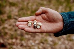 Mushrooms on the Palm of your hand. Little mushrooms on the Palm of your hand royalty free stock photography