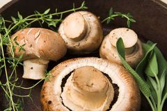 Mushrooms in pan Royalty Free Stock Photography