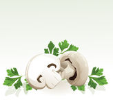 Mushrooms and parsley Stock Photography