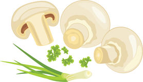 Mushrooms with parsley and chives. Illustration Stock Photos