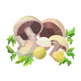 Mushrooms with parsley. On white field Royalty Free Stock Photos