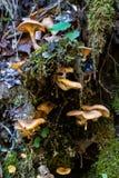 Mushrooms in Partnach Gorge in Garmisch-Partenkirchen, Bavaria, Germany stock photos