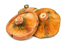 Mushrooms 10 Royalty Free Stock Image