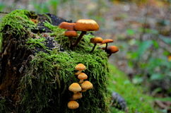 Mushrooms. A picture of mushrooms taken in the Murhard forest, Baden-Wurtemberg, Germany Royalty Free Stock Image