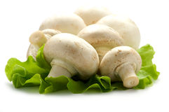 Mushrooms on a piece of lettuce Stock Photography
