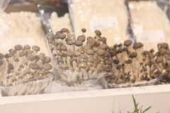 Mushrooms in plastic boxes Royalty Free Stock Images