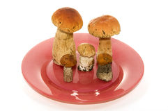 Mushrooms on a plate. Mushrooms on a red plate on a white background Stock Image