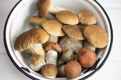 Mushrooms on a plate. Close up royalty free stock photography