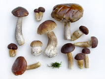 Mushrooms plateau. Sort of different wild mushrooms Stock Images
