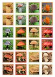 Mushrooms playing card Stock Images