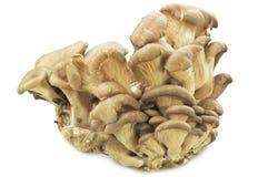 Mushrooms  Pleurotus ostreatus. On the white Royalty Free Stock Images
